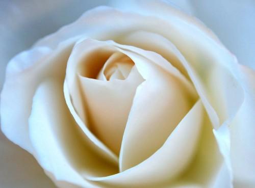 hope-blooms_HiRes