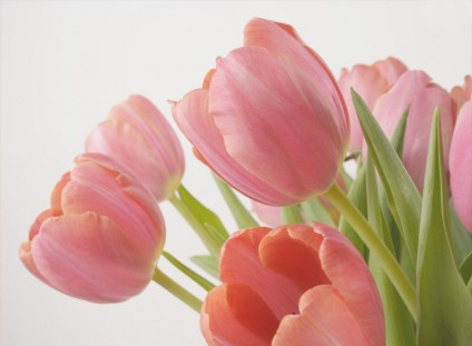 love_tulips_HiRes