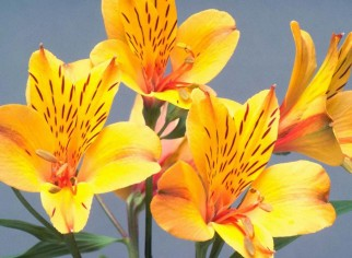 0-nice-yellow-flowers-HiRes
