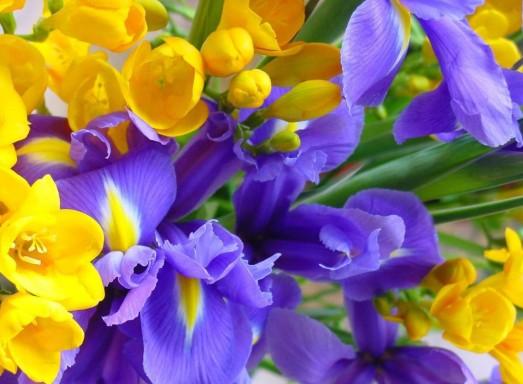 0-yellow-purple-flowers-HiRes