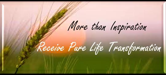pure life transformation