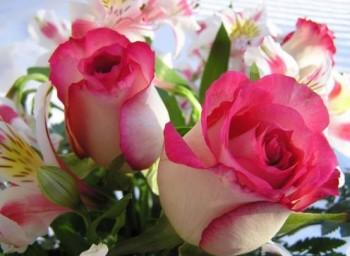 _-Grandma-Rose-Roses