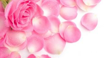 011_petals_340x191